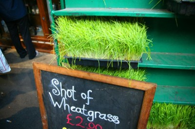 Borough Market Wheatgrass